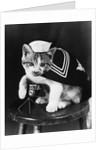 Cute little kitten dressed-up as sailor by Corbis