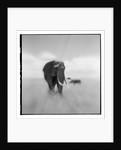 Elephant Herd, Masai Mara Game Reserve, Kenya by Corbis