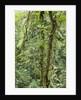 Rainforest, Costa Rica by Corbis
