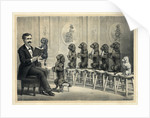 Educated Dogs by Corbis