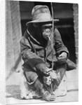 Monkey wearing jacket smoking cigarette by Corbis