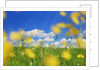 Beautiful background with yellow wildflowers by Corbis