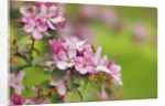 Close-up view of spring blossom by Corbis