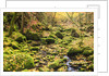Fall colours in a forest by Corbis