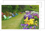Schreiner Iris Gardens in Salem, Oregon by Corbis