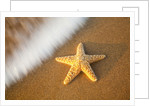 Starfish with evening surf rolling in by Corbis