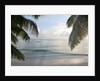 Landscape with palm leaves and beach at sunset, Grand Anse, Praslin Island, Seychelles by Corbis