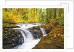 fall colors add beauty to Silver Falls River, Silver Falls State Park, Oregon, Pacific Northwest by Corbis
