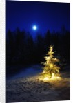 Small Christmas tree against silhouette trees and full moon by Corbis