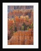 Eroded landscape in Bryce Canyon at Peekaboo Trail, USA, Utah, Bryce Canyon National Park by Corbis