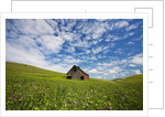 Old Red Barn in Field of Chick Peas with Great Clouds by Corbis