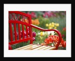 Chair in tulip field by Corbis