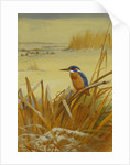 A Kingfisher Amongst Reeds in Winter by Archibald Thorburn