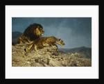 Lions on the Hunt by Julius Hugo Bergmann