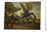 A Grey Prancing Stallion with Flowing Mane with Stallions Fighting in a Rocky Landscape by Corbis