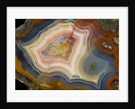 Condor Agate with fortifcations by Corbis