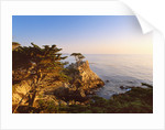 Lone cypress growing on cliff, California, USA by Corbis