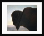 Buffalo Head by Albert Bierstadt