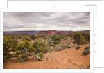 Desert landscape, Canyonlands National Park, Utah. USA by Corbis