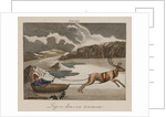 Sleigh in Lapland by Corbis