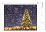 Christmas tree under snowfall by Corbis