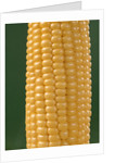 detail Of An Ear Of Yellow Corn On The Cob On Green Background by Corbis