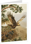 Golden Eagle with Young, Aviemore by John Cyril Harrison