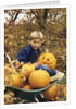 1980s Boy Setting In Wheel Barrow With Halloween Pumpkins Looking At Camera by Corbis