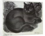 Sleepy Cat by Eileen Mayo