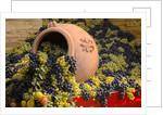 Vineyards near Monte Falco by Corbis