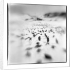 Chinstrap Penguins, Antarctica by Corbis