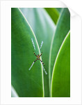 Agave growing with spider web attached by Corbis