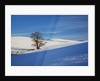 Lone tree in snow covered winter field by Corbis