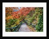 Path through red vine maple in full Autumn glory by Corbis