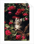 1980s blue calico longhaired kitten amid red roses by Corbis