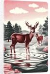 Deer in Stream by Corbis