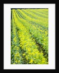 Farming in the Willamette Valley of Oregon by Corbis