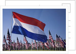 US and Dutch Flag by Corbis