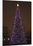 Capitol Christmas Tree at dusk in front of U.S. Capitol, Washington D.C. by Corbis