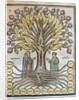 Llull, Ramon (1233/1235-1315/1316) by Corbis