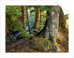 Forest along the Zig Zag River by Corbis