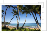 Palm Trees and Beach Along the Southern Maui by Corbis