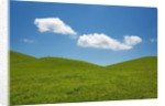 Grass meadow and clouds by Corbis