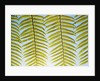 Cycad leaf by Corbis
