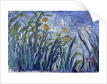 Iris by Claude Monet