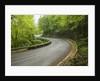 Road to Badia a Coltibuono by Corbis