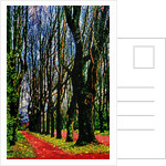 Trees and Way by Corbis
