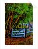 Gate by Corbis