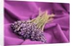A bouquet of lavender flowers on a purple canvas by Corbis