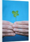 Man holding four-leaf clover by Corbis